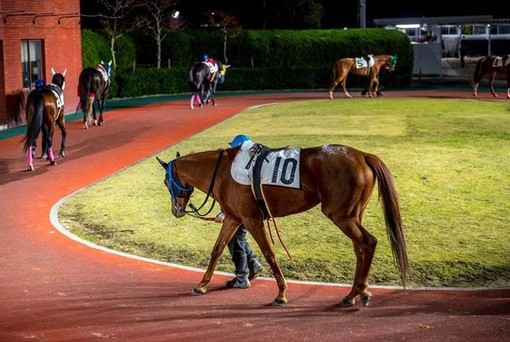返し馬は「馬のウォーミングアップ」!競馬の的中率を高めるためのチェックポイントとはのサムネイル