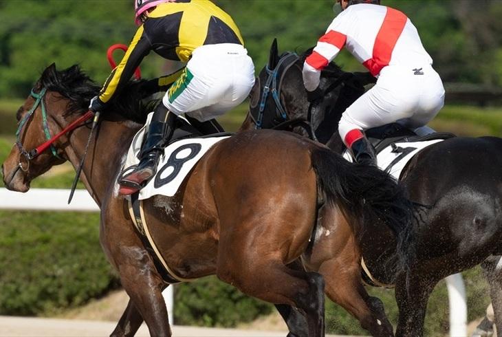 競馬の攻略法「追い上げ」とは?活用するメリットや注意点を一挙公開しますのサムネイル