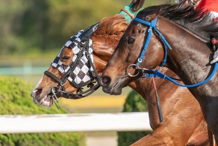 競馬で必ず儲かる買い方ってあるの?的中率アップの極意をご紹介のサムネイル